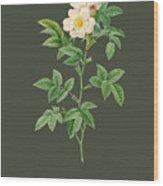 Rose62 Wood Print