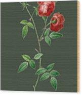 Rose65 Wood Print