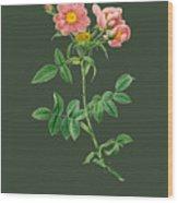 Rose73 Wood Print