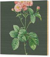 Rose76 Wood Print