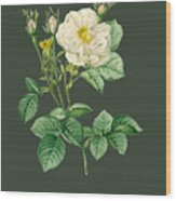 Rose81 Wood Print