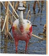 Roseate Spoonbill And Water Drops Wood Print