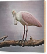 Roseate Spoonbill Costa Rica Wood Print