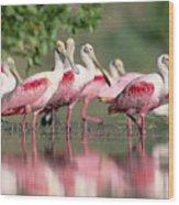 Roseate Spoonbill Flock Wading In Pond Wood Print