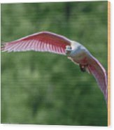 Roseate Spoonbill In Flight 2 Wood Print