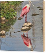 Roseate Spoonbill Reflections Wood Print