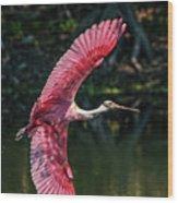 Roseate Spoonbill Wood Print