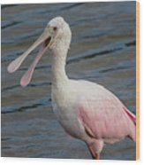 Roseate Spoonbill With Something To Say Wood Print