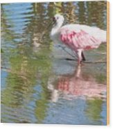 Roseate Spoonbill Young Adult Wood Print
