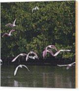 Roseates Takeoff From Sanibel  Wood Print
