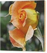 Rosebud Opening Wood Print