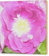 Rosegarden No. 24 Wood Print