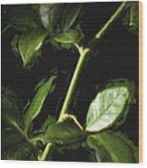 Roseless Stem Wood Print