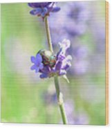 Rosemary And Lavender Wood Print