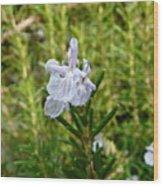 Rosemary Bloom Wood Print