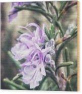Rosemary Blooming Wood Print