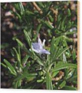 Rosemary Flower Wood Print
