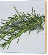 Rosemary Isolated On White Wood Print