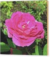 Roses 10 Wood Print