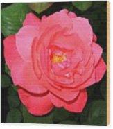 Roses 12 Wood Print