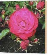 Roses 5 Wood Print