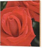 Roses-5814 Wood Print