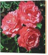 Roses 9 Wood Print