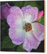 Roses After The Rain Wood Print