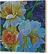 Roses Aglow Wood Print