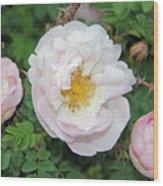 Roses and Rain Wood Print