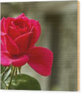 Red Rose Wall Art Print Wood Print