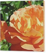 Roses Art Prints Orange Rose Flower 11 Giclee Prints Baslee Troutman Wood Print