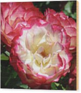 Roses Art Prints Pink White Rose Flowers Gifts Baslee Troutman Wood Print