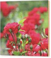 Roses Garden Spring Scene Wood Print