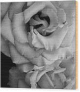 Roses In Black And White Wood Print