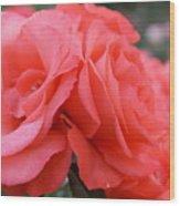 Roses In Dark Pink I Wood Print