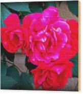 Roses On Stucco Wood Print