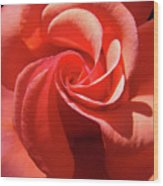 Roses Orange Rose Flower Spiral Artwork 4 Rose Garden Baslee Troutman Wood Print