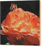 Roses Orange Rose Flowers Rose Garden Art Baslee Troutman Wood Print