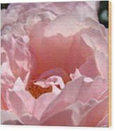 Roses Pink Rose Flower 2 Rose Garden Art Baslee Troutman Collection Wood Print