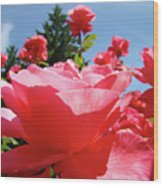 Roses Pink Rose Landscape Summer Blue Sky Art Prints Baslee Troutman Wood Print