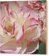 Roses Pink White Rose Flowers 4 Rose Garden Artwork Baslee Troutman Wood Print