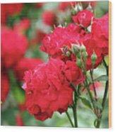 Roses Spring Scene Wood Print