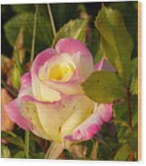 Roses Warm Hearts Wood Print