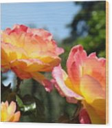 Roses Yellow Roses Pink Summer Roses 4 Blue Sky Landscape Baslee Troutman Wood Print
