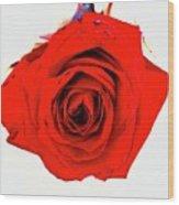 Roses26 Wood Print