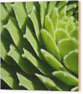 Rosette Wood Print