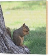 Roswell Squirrel Wood Print
