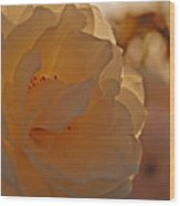 Rosy Afternoon 2 Wood Print