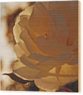 Rosy Afternoon 3 Wood Print